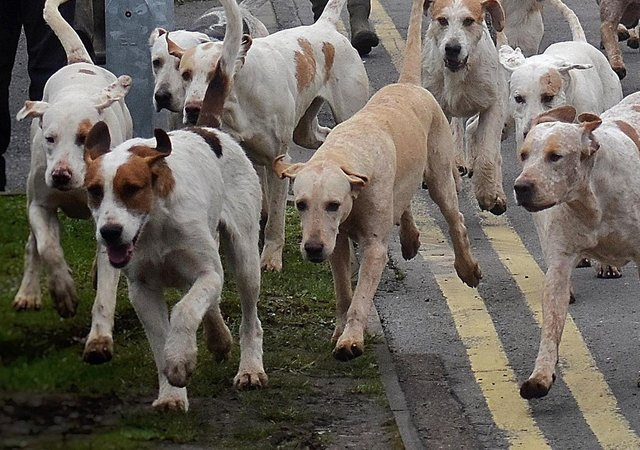 Hunting and meeting with dogs has been banned on Peterborough City Council land following a Full Council vote.