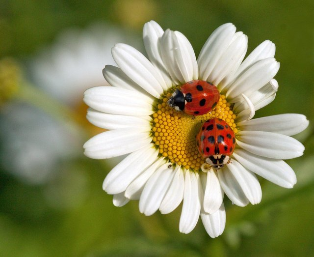 People in the Peterborough area are being encouraged to get involved in a new wildlife gardening scheme. Photo: Sarah Lambert