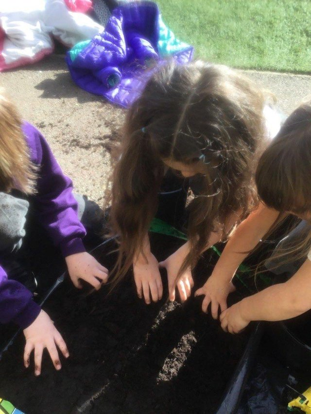 Newark Hill Primary taking part in the grow your own potatoes scheme
