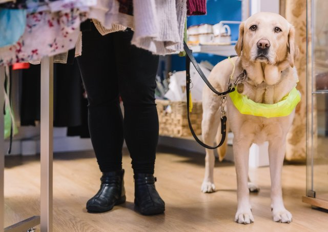 Queensgate charity partner  Guide Dogs UK