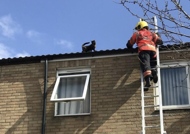 The cat is rescued. Pic: RSPCA
