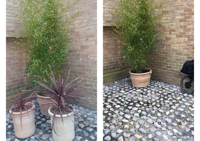 Before and after - the two smaller planters were taken within a day of volunteers with Stamford In Bloom placing them in town. The larger one went on Tuesday. EMN-210331-123742001