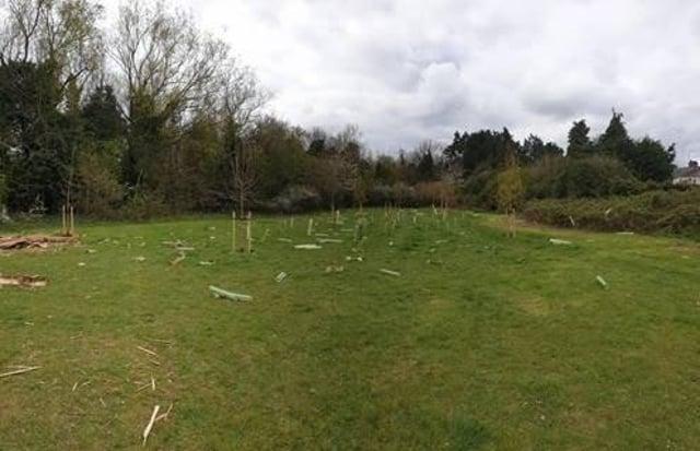 The vandalised trees