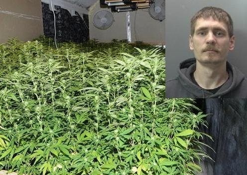 Donatas Sungaila and some of the cannabis found at the home