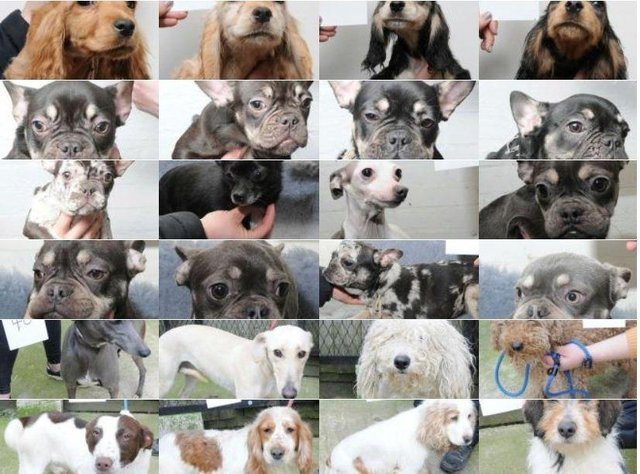 Police have issued images of dogs in the hope of tracing their owner
