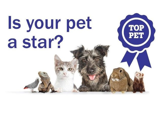 Top pet competition.