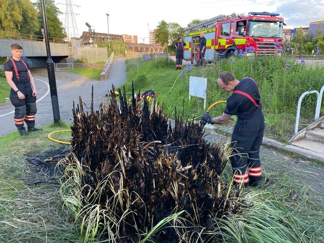 Pampas grass set on fire in the centre of Peterborough.