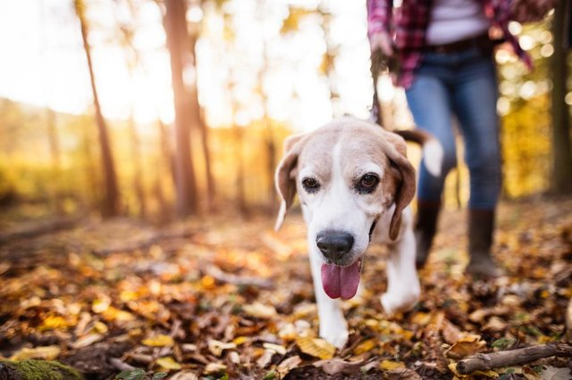 If you're looking for inspiration of where to take your pooch in your local area, then these are seven of the best dog walks in Peterborough